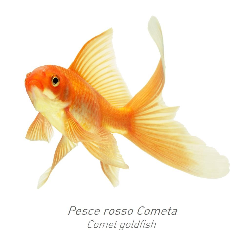Consigli padovan for Laghetto pesci rossi e tartarughe
