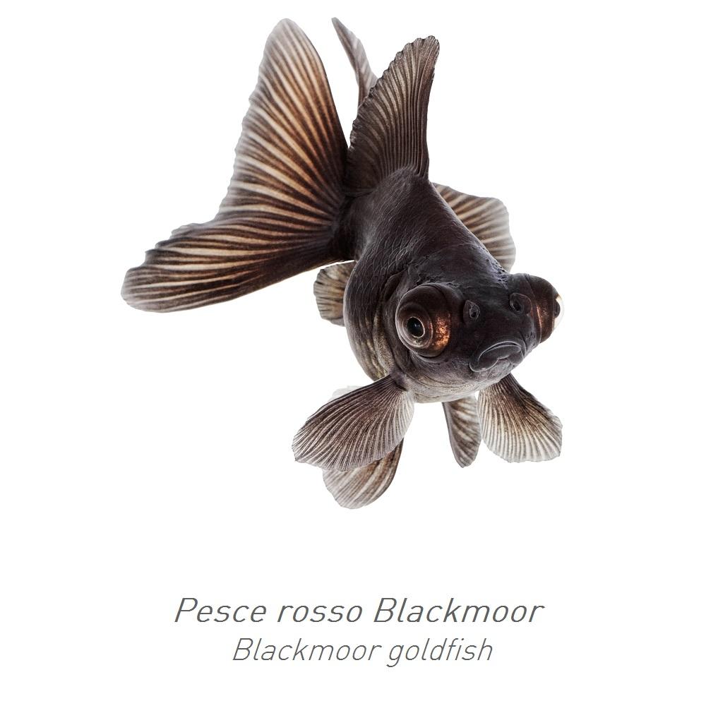 Consigli padovan for Filtro vasca pesci rossi