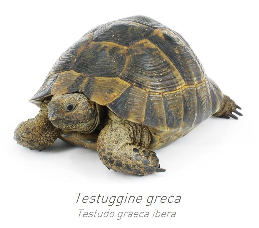 Consigli padovan for Terrario per tartarughe acquatiche