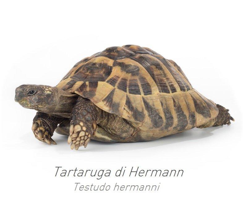 Consigli padovan for Letargo tartarughe acqua