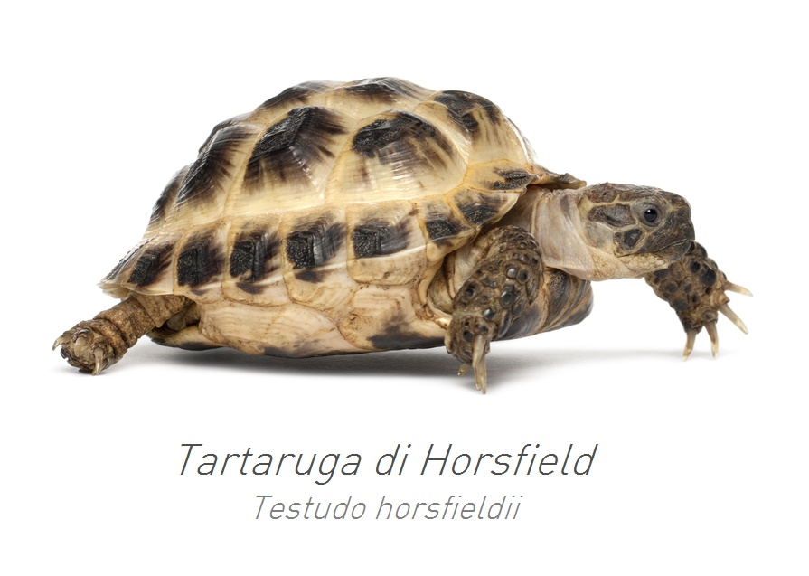 Consigli padovan for Terrario per tartarughe neonate