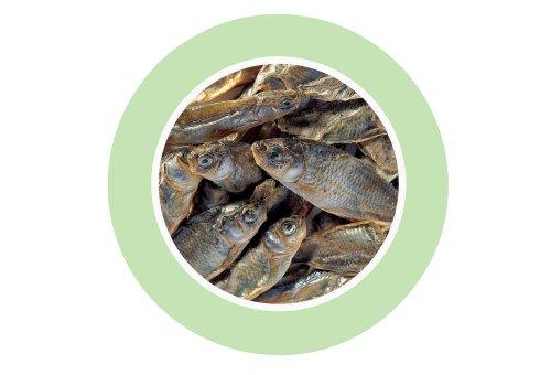 Fishes. Padovan